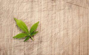 marijuana-3065621_640 (1)