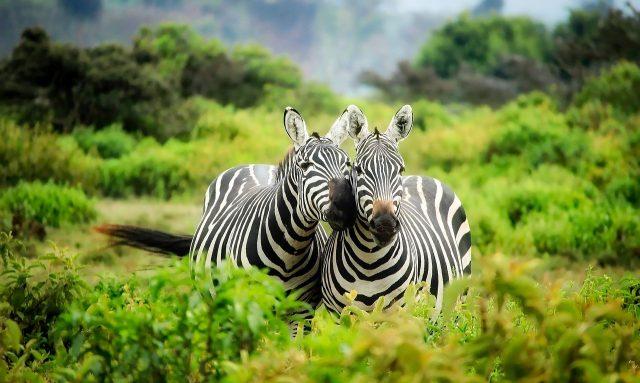 Les indispensables avant de partir en vacances au Kenya