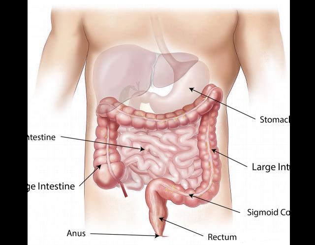 Santé intestinale : qu'est-ce que c'est ? Pourquoi c'est important ?
